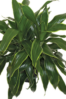 choose a large office plant office plants blog
